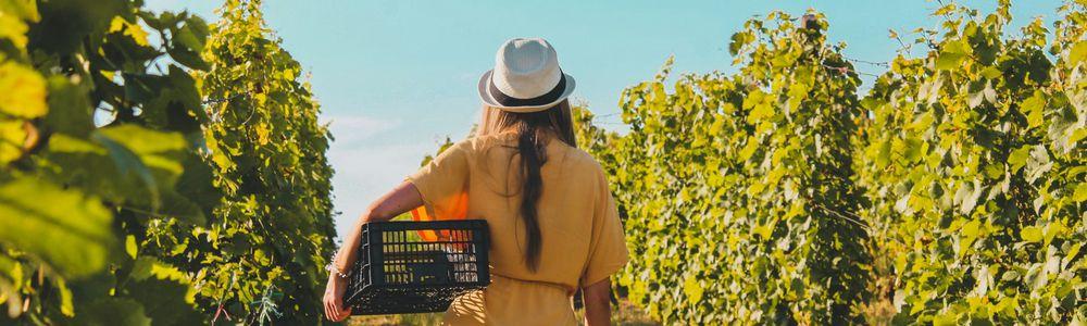 ニュージーランド各地域のファームジョブで扱う農作物